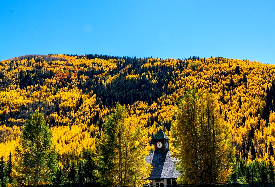 Vail, Colorado - Foliage