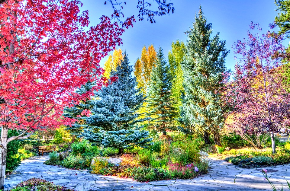 Vail, Colorado - Fall Foliage