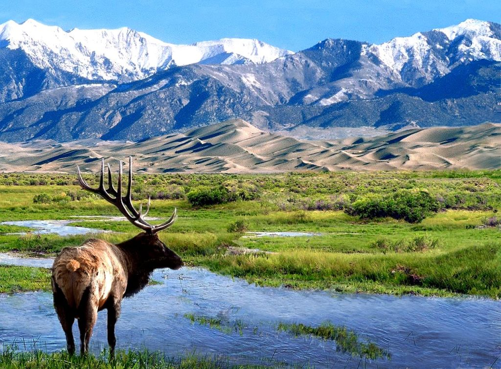 MLK - Great Sand Dunes National Park